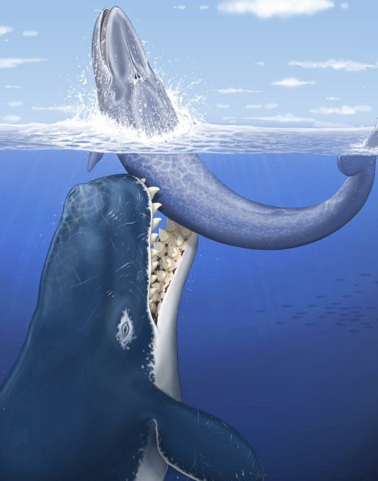 Leviathan Prehistoric Whale